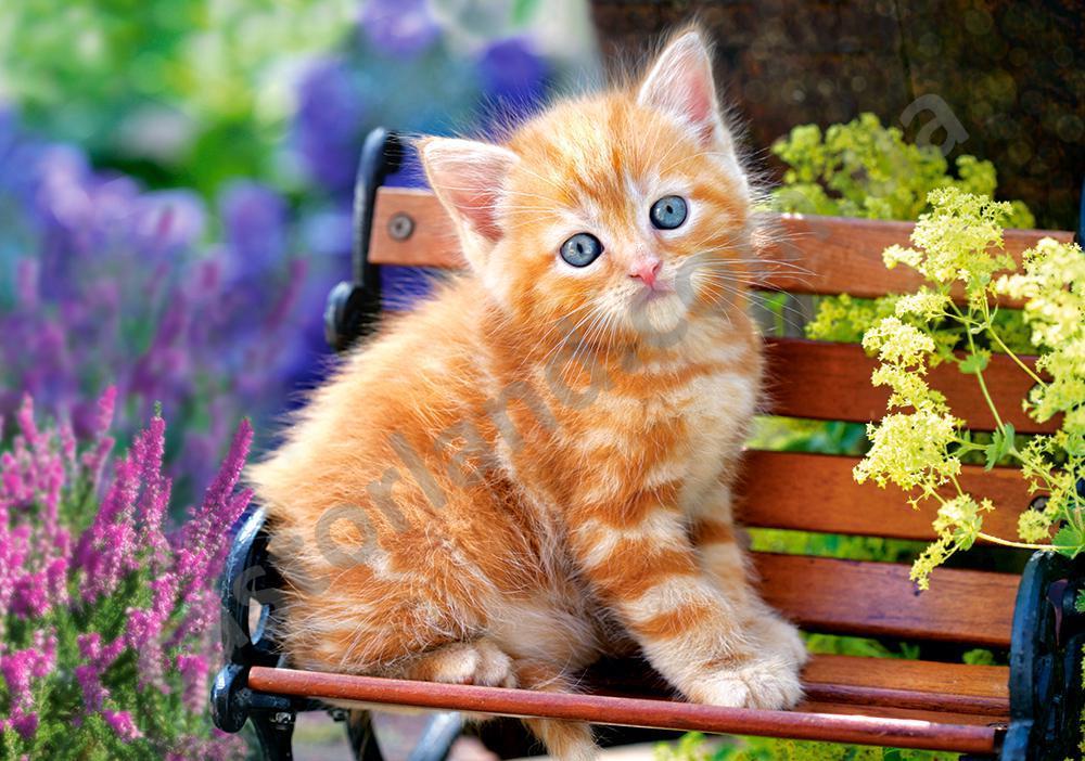 "Пазли 500 їв. Castorland ""Ginger Kitten"" 52240"