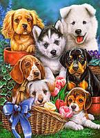 "Пазли 300 ел. Castorland ""Puppies"" 030323"