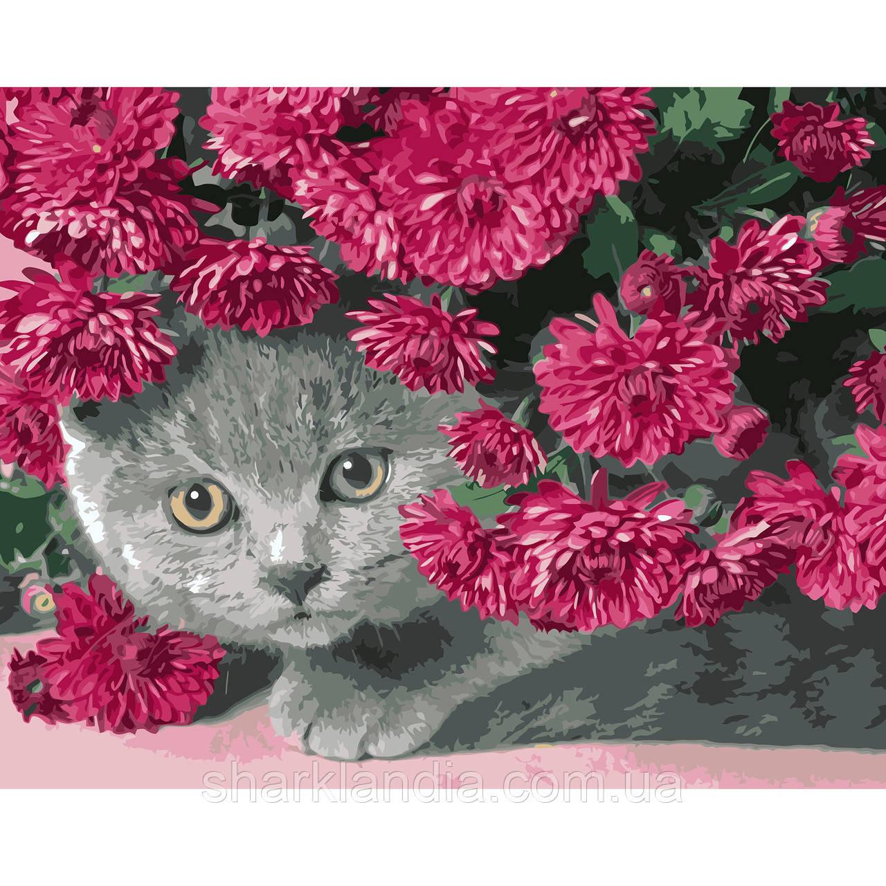 Картина за номерами Сірий кіт в кольорах  40*50см Strateg Розмальовки