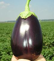 Семена баклажана Галине F1, Clause 5 грамм | профессиональные