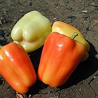 Проф семена сладкого перца раннего толстостенного Фламинго F1 Clausе 5 грамм, для теплиц и открытого грунта