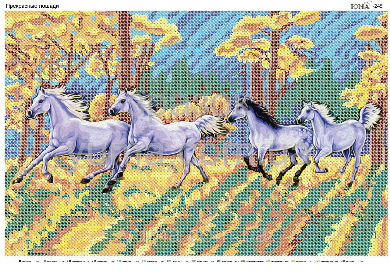 Схема для вишивки прекрасні кінь