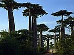 """Экскурсионный тур на Мадагаскар """"Такой загадочный Мадагаскар. Юг и отдых в Мурундава"""" на 10 дней / 9 ночей, фото 4"""