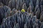 """Экскурсионный тур на Мадагаскар """"Такой загадочный Мадагаскар. Юг и отдых в Мурундава"""" на 10 дней / 9 ночей, фото 5"""