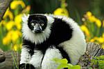 """Экскурсионный тур на Мадагаскар """"По северу страны с отдыхом на Носи Бе"""" на 8 дней / 7 ночей, фото 5"""