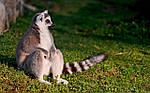 """Экскурсионный тур на Мадагаскар """"Тур по Югу с посещением Амбухицара"""" на 15 дней / 14 ночей, фото 2"""