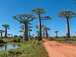 """Экскурсионный тур на Мадагаскар """"Тур по Югу с посещением Амбухицара"""" на 15 дней / 14 ночей, фото 3"""