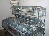 Клетка для кролей маточная КМ-4С