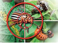 Инсектициды (средства борьбы с вредными насекомыми)