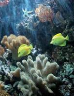 Лампы для освещения  аквариумов, террариумов