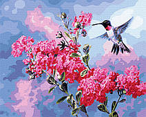 Колибри в цвету