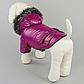 Зимняя одежда для собак, куртка ChicDog, размер S, фото 2