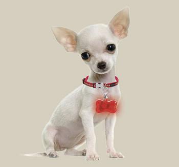 Светодиодная подсветка для собак на ошейник LIDL