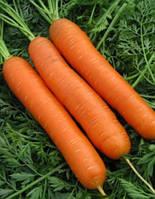 "Семена - Морковь ранняя "" Сатурно F1"" ТМ Клоз (Clause) Франция, 25 000 семян"