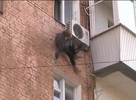 Бабушка 97 лет выпала из окна и осталась жива благодаря кондиционеру