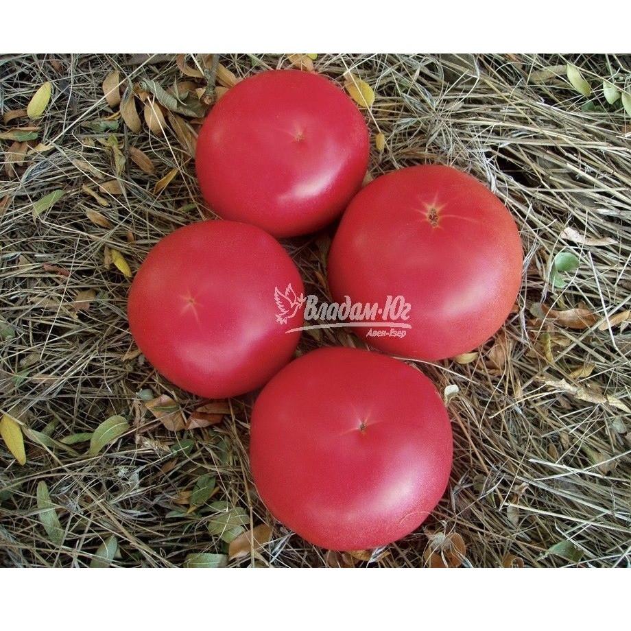 Насіння томату Панамера F1 (1000 нас.) Clause
