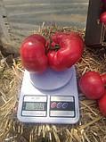 Семена томата Панамера F1 (1000 сем.) Clause, фото 3