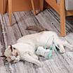 Розумна USB іграшка для котів з дистанційним пультом і підсвічуванням, фото 4