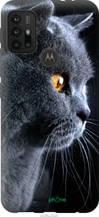 """Чехол на Motorola Moto G10 Красивый кот """"3038u-2319-2448"""""""