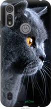 """Чохол на Motorola E6i Красивий кіт """"3038u-2355-2448"""""""