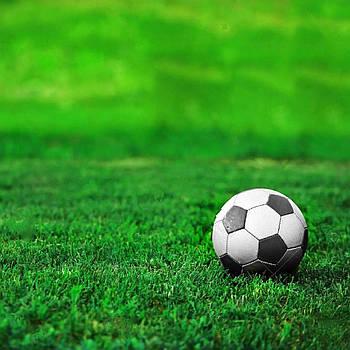 Газонна трава Спортивна (насіння)