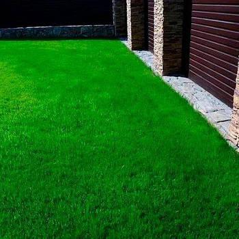Газонна трава Ліліпут преміум (насіння)