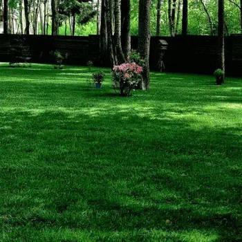 Газонная трава Теневая (семена) 10 кг
