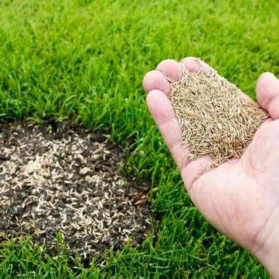 Газонная трава Быстрый ремонт (семена)