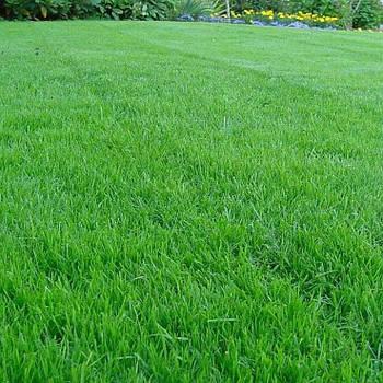 Газонная трава Универсальная (семена) 10 кг