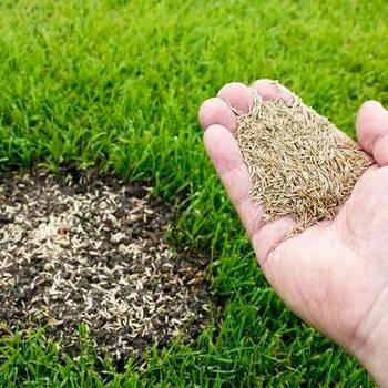 Газонна трава (насіння)