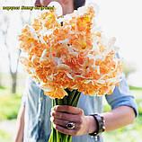 Нарцис Sunny Girlfriend, фото 6
