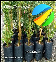Пакеты для саженцев деревьев дренаж 28(2х6,5)25, 75мкм