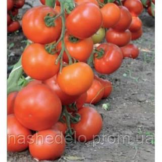 Семена томата Дофу F1 1000 семян Rijk Zwaan