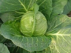 Семена капусты б/к Этма F1 2500 семян (калиброванные) Rijk Zwaan