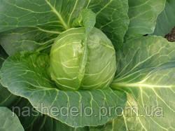 Семена капусты б/к Этма F1 1000 семян (калиброванные) Rijk Zwaan