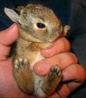 Утеплення кролячих кліток