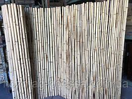 Паркан бамбуковий 1,5 м *3,0 м.