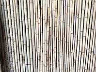 Паркан бамбуковий 1,5 м *3,0 м., фото 1
