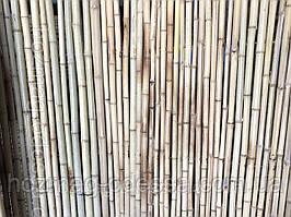 Забор бамбуковый 1,0 м *3,0 м.