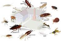 Засоби захисту від побутових шкідників