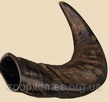 Ласощі для собак Ріг буйвола натуральний середній.