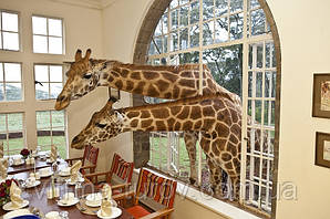 """Экскурсионный тур в Кению """"Программа №1: Кения - Танзания"""" на 11 дней / 10 ночей"""