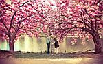 """Групповой тур в Японию """"Сакура-2016 эконом"""" на 8 дней / 7 ночей, фото 3"""