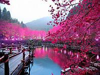 Групповой тур в Японию «Сакура Ханами 2016» на 13 дней / 12 ночей