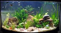 Для аквариумов