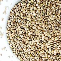 Семена конопли 500 г