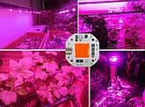 Cветодиод 20Вт 220В полный спектр (для растений) 54х54мм LED COB матрица с защитой, фото 2