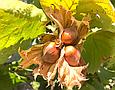 Фундук целый жареный очищенный 200г, Грузия, лещина лесной орех натуральный без скорлупы, фото 2