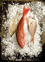Oборудование для переработки рыбы AGK Kronawitter