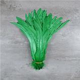 Перо петуха Натуральное Цвет Зеленый 20-30см, фото 2